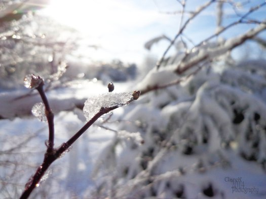 SnowCrystals